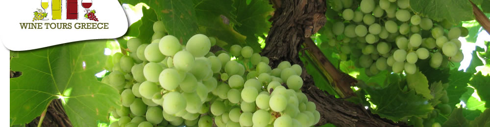 wine_tours_greece_grapes_1