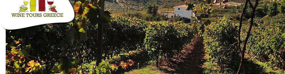 wine_tours_greece_guided_4